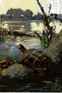 painted turtle - freshwater turtles having bright yellow and red markings