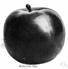 McIntosh - early-ripening apple popular in the northeastern United States