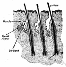 root hair - thin hairlike outgrowth of an epidermal cell just behind the tip