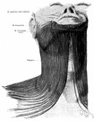 platysma - either of two broad muscles located on either side of the neck and innervated by the facial nerve