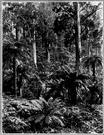 eucalyptus - a tree of the genus Eucalyptus