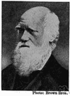 Charles Darwin - English natural scientist who formulated a theory of evolution by natural selection (1809-1882)