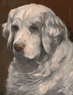 clumber spaniel - a thickset spaniel with longish silky hair