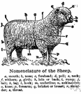 terminology - a system of words used to name things in a particular discipline