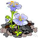 stock - any of various ornamental flowering plants of the genus Malcolmia