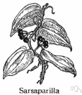 sarsaparilla - any of various prickly climbing plants of the tropical American genus Smilax having aromatic roots and heart-shaped leaves