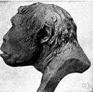 pithecanthropus - former genus of primitive apelike men now Homo erectus