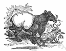 Tapirus indicus - a tapir found in Malaya and Sumatra