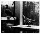 volary - a building where birds are kept