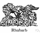rhubarb - plants having long green or reddish acidic leafstalks growing in basal clumps