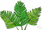 fern - any of numerous flowerless and seedless vascular plants having true roots from a rhizome and fronds that uncurl upward