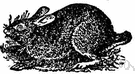 canecutter - a wood rabbit of southeastern United States swamps and lowlands