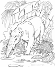 genus Gomphotherium - type genus of the Gomphotheriidae