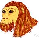 Pan troglodytes verus - masked or pale-faced chimpanzees of western Africa