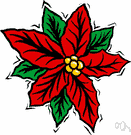 Christmas flower - tropical American plant having poisonous milk and showy tapering usually scarlet petallike leaves surrounding small yellow flowers