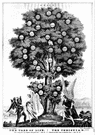 devil tree - evergreen tree of eastern Asia and Philippines having large leathery leaves and small green-white flowers in compact cymes