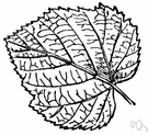 cordate leaf - a heart-shaped leaf