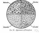 protoplasm - the substance of a living cell (including cytoplasm and nucleus)