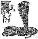 Naja haje - cobra used by the Pharaohs as a symbol of their power over life and death