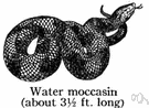 cottonmouth moccasin - venomous semiaquatic snake of swamps in southern United States