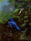 chatterer - passerine bird of New World tropics