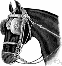 blinker - blind consisting of a leather eyepatch sewn to the side of the halter that prevents a horse from seeing something on either side