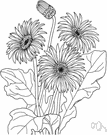 African daisy - shrub of southwestern Mediterranean region having yellow daisylike flowers