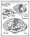process - (psychology) the performance of some composite cognitive activity