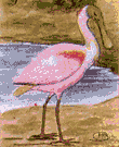 roseate spoonbill - tropical rose-colored New World spoonbill