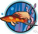 poeciliid fish - small usually brightly-colored viviparous surface-feeding fishes of fresh or brackish warm waters