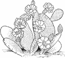 nopal - cactus having yellow flowers and purple fruits
