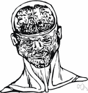 frontal lobe - that part of the cerebral cortex in either hemisphere of the brain lying directly behind the forehead