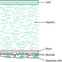 Fig. F6 Diagram of the three layers of the precorneal film attached to the squamous epithelial cells