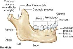 coronoid process of the mandible definition of coronoid process of