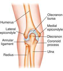 elbow definition of elbow by medical dictionary