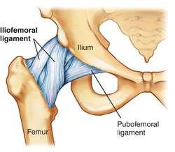 Illium Muscle 41