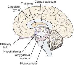 limbic system definition of limbic system by medical