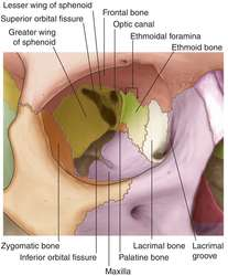 Bones of the orbit | definition of bones of the orbit by Medical ...