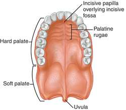 Bony Plate Between Mouth And Nose 113