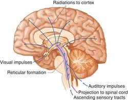 ascending reticular activating system adalah pdf