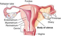 Definition for uterus and vagina