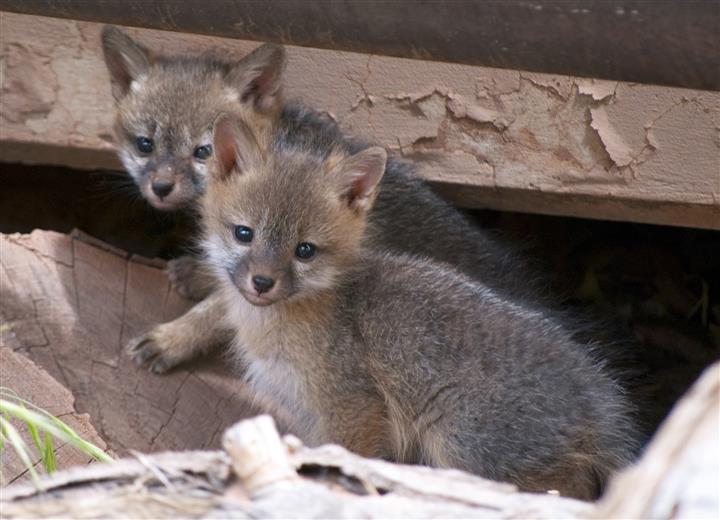41 Adorable Baby Animal Names With Pics