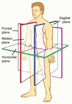 Anatomical Movements of the Human Body | Geeky Medics  |Lateral Plane