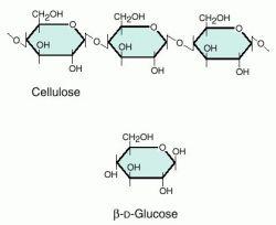 Cellulose Definition
