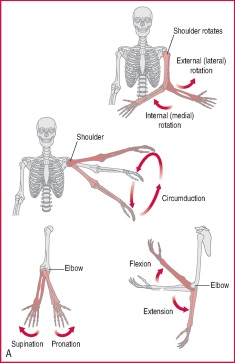 Internal rotation | definition of internal rotation by Medical ...