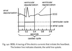 Fig. 140 ECG. A tracing of the electric currents that initiate the heartbeat. The broken line indicates diastole, the solid line systole.