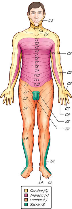 t8 dermatome choice image