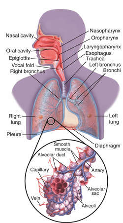 Wet lung definition of wet lung by medical dictionary ccuart Images