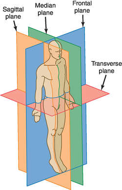 what is sagittal plane in medical terms