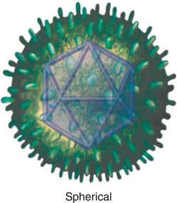 hpv virus definition